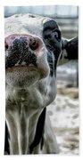 Cow Kiss Me Beach Towel