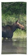 Cow Moose Breakfast Beach Towel