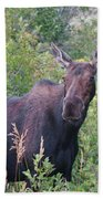 Cow Moose Portrait Beach Towel