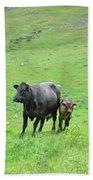 Cow With Calf On Thorpe Hillside Beach Towel