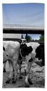 Cows Peek A Boo Beach Towel