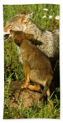Coyote And Pup Beach Towel