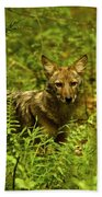 Coyote Of The Woods Beach Towel
