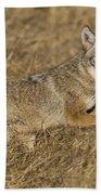 Coyote Running Beach Towel