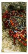 Crab In Cozumel Beach Towel