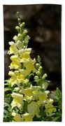 Creamy Yellow Snapdragon Beach Towel
