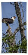 Crested Caracara Beach Towel
