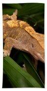 Crested Gecko Rhacodactylus Ciliatus Beach Towel