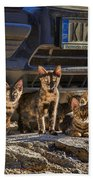 Cretan Cats-1 Beach Towel