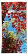Crimson Foliage Beach Towel