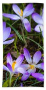 Crocuses Beach Towel