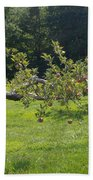 Crooked Apple Tree Beach Towel