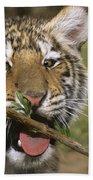 Crosseyed Siberian Tiger Cub Endangered Species Wildlife Rescue Beach Towel