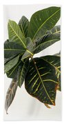 Croton Houseplant Beach Towel