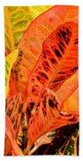 Croton's Many Colors Beach Towel