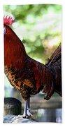 Crowing Red Junglefowl Rooster Beach Towel