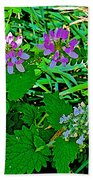Crown Vetch And Catnip In Pipestone National Monument-minnesota Beach Towel