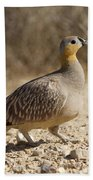 Crowned Sandgrouse Pterocles Coronatus Beach Towel