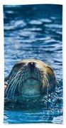 Cruisin Beach Towel by Douglas Barnard