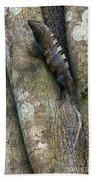 Ctenosaur 3 Beach Towel