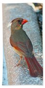 Curious Cardinal Beach Towel