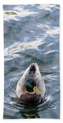 Curious Duck Beach Towel