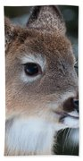 Curious Fawn Beach Towel