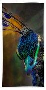 Curious Peacock  Beach Towel