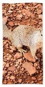 Curious Squirrel 2 Beach Towel
