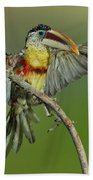 Curl-crested Aracari About To Perch Beach Towel