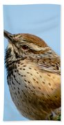 Cute Cactus Wren Beach Towel by Robert Bales