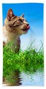 Cute Cat Outdoor Portait Beach Towel