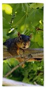 Cute Fuzzy Squirrel In Tree Beach Towel