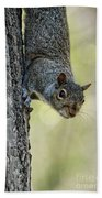Cute Squirrel  Dare Me Beach Towel