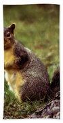 Cute Squirrel Beach Towel by Robert Bales