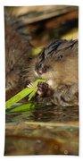 Cutest Water Rats Beach Towel