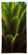 Cycad Sago Palm Beach Towel