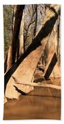 Cypress Hallway Beach Towel