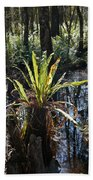 Cypress Knees And Ferns Beach Towel