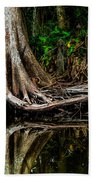 Cypress Roots Beach Towel