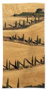 Cypress Tree Lined Road Beach Towel