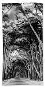 Cypress Tree Tunnel Point Reyes Beach Towel