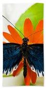 Cythera Butterfly Beach Towel