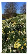 Daffodil Hill Beach Sheet