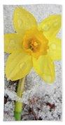 Daffodil In Spring Snow Beach Towel