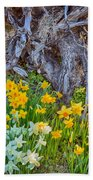 Daffodils And Sculpture Beach Towel