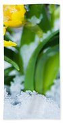 Daffodils In The Snow  Beach Towel