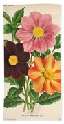 Dahlia Coccinea From A Begian Book Of Flora. Beach Towel
