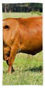 Dairy Cow Beach Towel