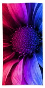 Daisy Daisy Red To Blue Beach Towel